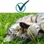 DISANE 2 Pipettes Antiparasitaires 100% Naturelles pour Chats | 2 Mois de Protection Contre Les Insectes et Les parasites: puces, tiques et moustiques | Anti puces sans toxicité pour Le Chat