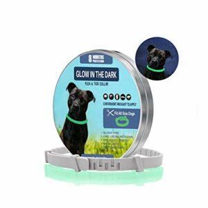 Collier anti-tiques pour chiens et chats | Collier de prévention lumineux contre les parasites avec jusqu'à 8 mois de protection | Collier fluorescent universel réglable à chaque taille
